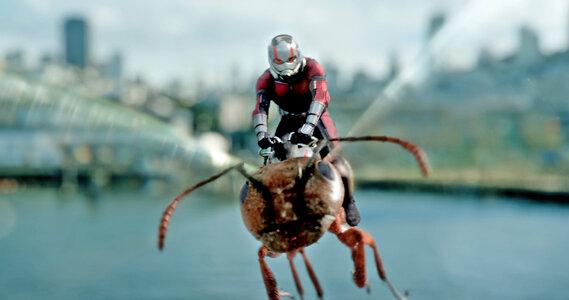Elige tu vengador favorito Foto de ant man subido a hormiga